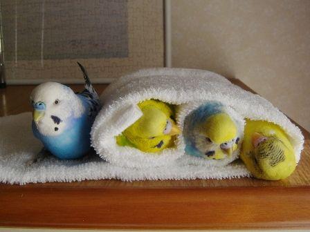 "shakura-kazuki: "" Birds gotta love warm places! """