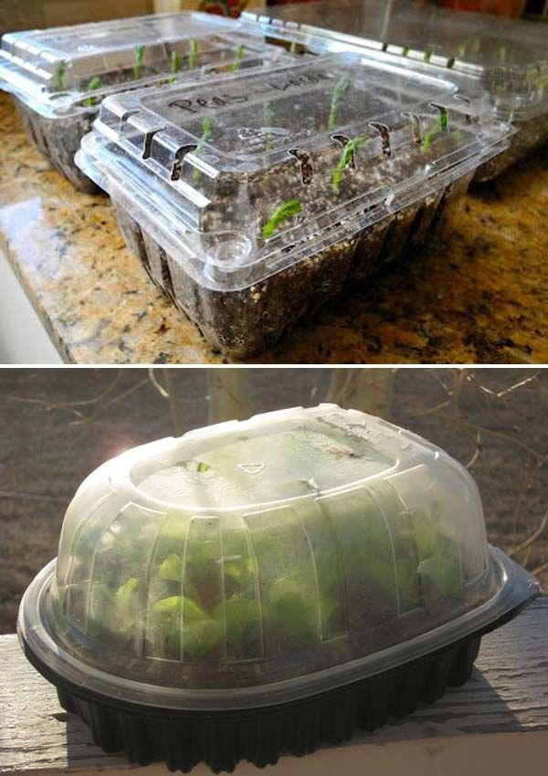Start seeds indoors in plastic strawberry containers or rotisserie chicken container.- 17 Simple Budget-Friendly Plans to Build a Greenhouse