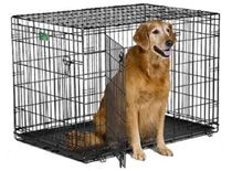 Midwest iCrate Double-Door Folding Metal Dog Crate, 42 Inches by 28 Inches by 30 Inches.