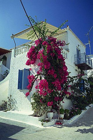 Bougainvillea on a white house on the island of Spetse, Greek Islands, Greece, Europe