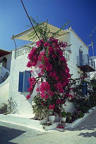 Bougainvillea on a white house on the island of Spetse, Greek Islands, Greece, Europe