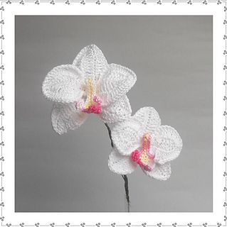 Orchids....crochet happy? I would like this please :P @Jasmine Ann {The Gluten Free Scallywag} Sauceda