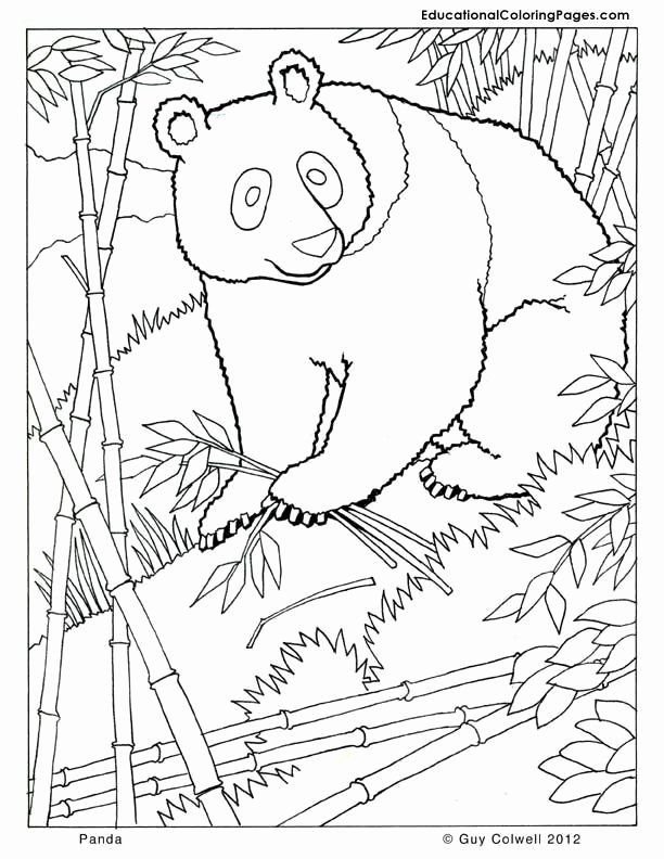 Free Coloring Pages Animals Realistic In 2020 Animal Coloring Pages Panda Coloring Pages Bear Coloring Pages