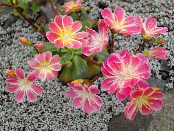 Southern California Drought Tolerant Native Plants 640 x 480