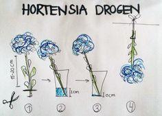 hortensia drogen FLOOR'S MOESTUIN