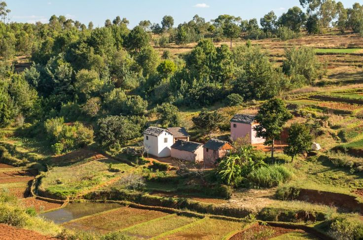 Malagasy homes-Houses made of bricks on a hilly landscape alongside a typical Malagasy rice farm
