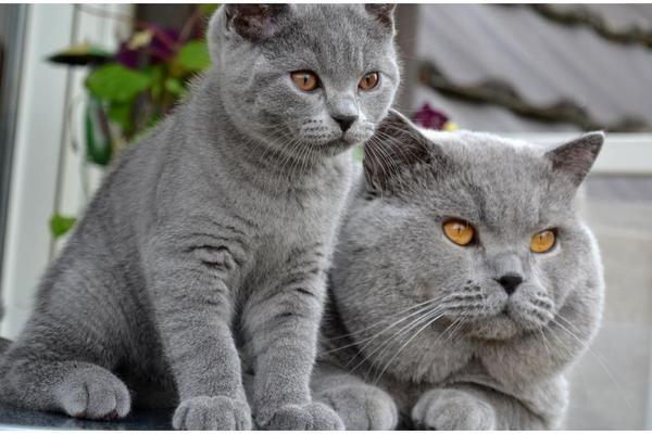 Mommi and her kitten