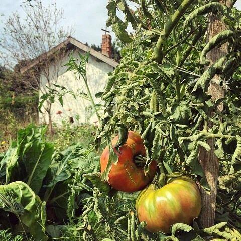 PlatFerma | Ferma Sibioara, legume din Constanța (și) pe Instagram | http://platferma.ro