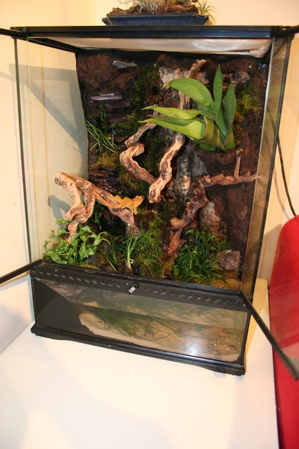 Crested Gecko Build Reptile Forums Herps Amp Tanks