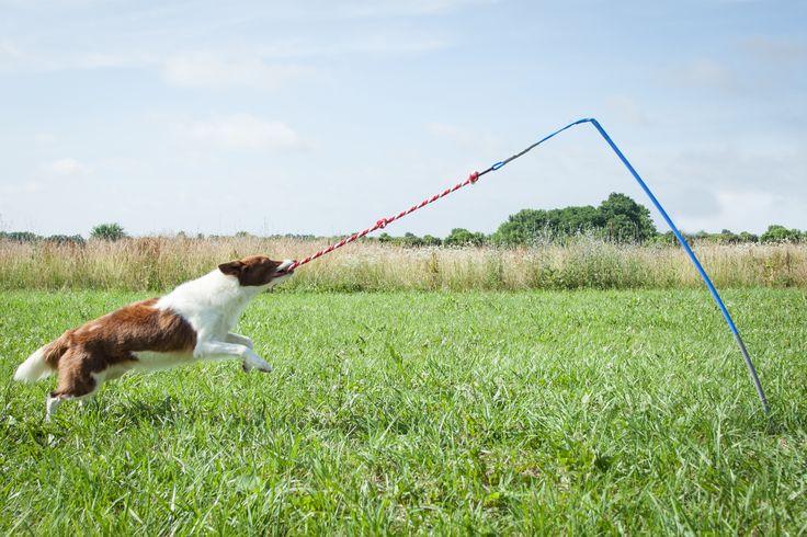 Best Indoor Dog Toys For Australian Shepherds