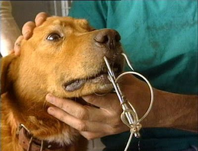 Ζωντανοί σκύλοι γίνονται δολώματα για το ψάρεμα καρχαρία!   Kiss My GRass