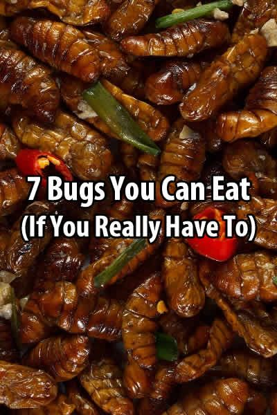 You read that right. You might think bugs are gross, but if you are starving and there's no other option, a handful of bugs will look pretty appetizing.