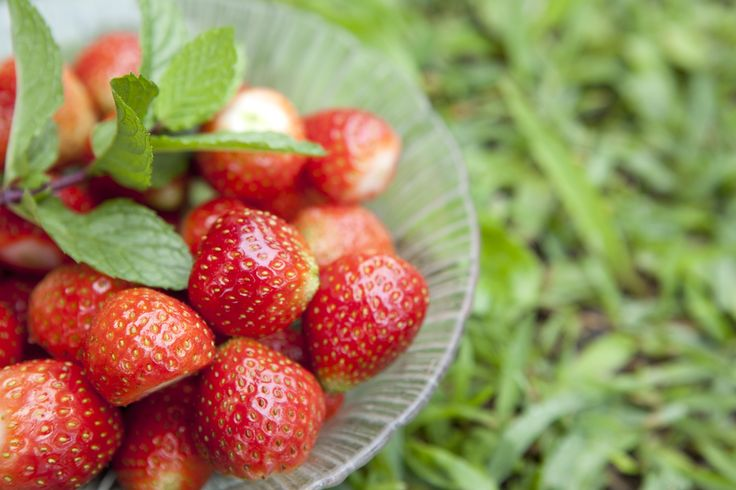 Sweet, juicy and packed with nutrients, strawberries are one of nature's healthiest foods, and thrive on the cooler slopes of the mountainous hinterland. Leaving the hustle and bustle of southern Bali behind, we head for the hills, Strawberry Hill in fact.