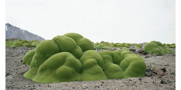 世界最古の植物たち