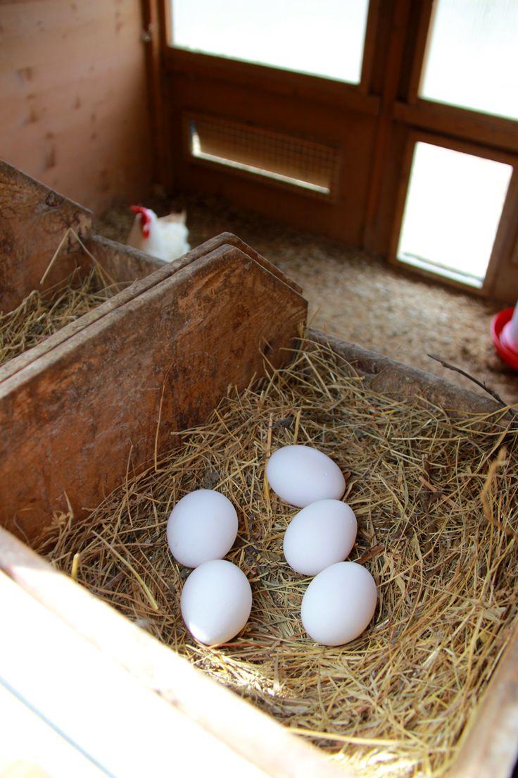 Fresh free-range farm eggs