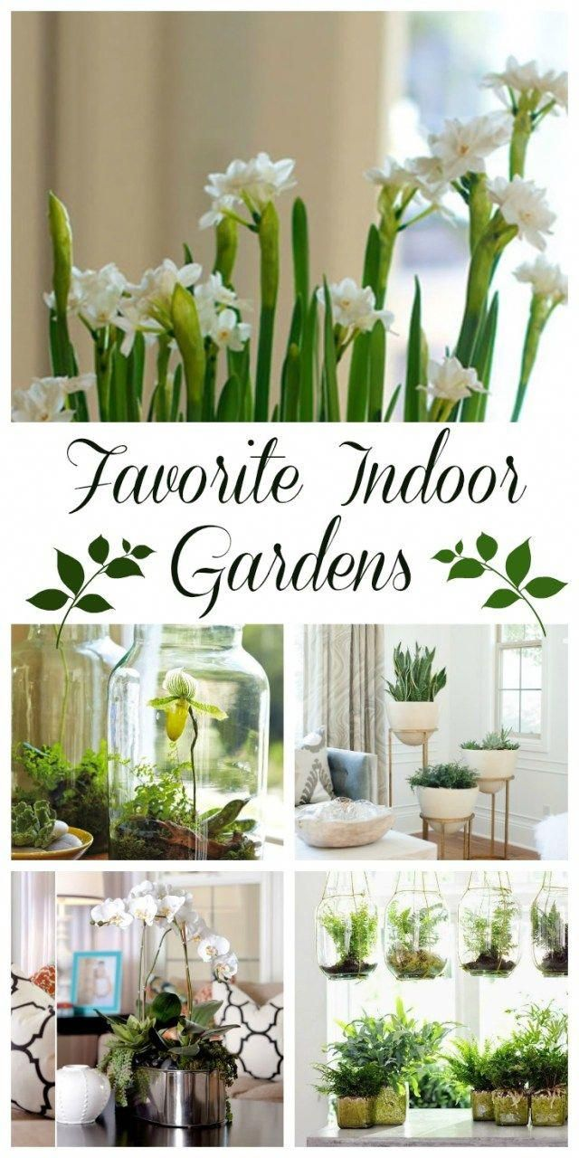 Breathing New Life with Favorite Indoor Plant Gardens Daily