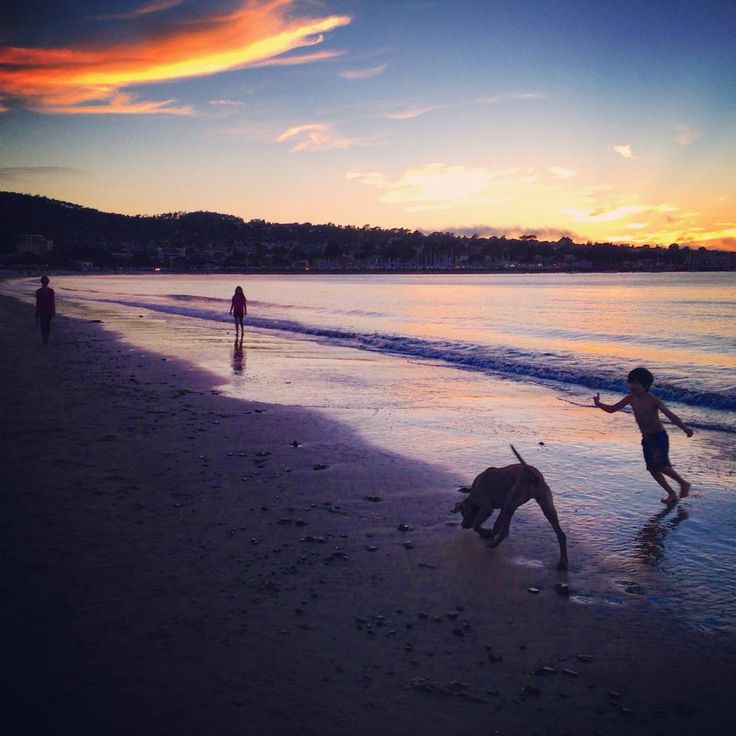 12 best images about parks beaches on pinterest parks for Best beach in monterey ca