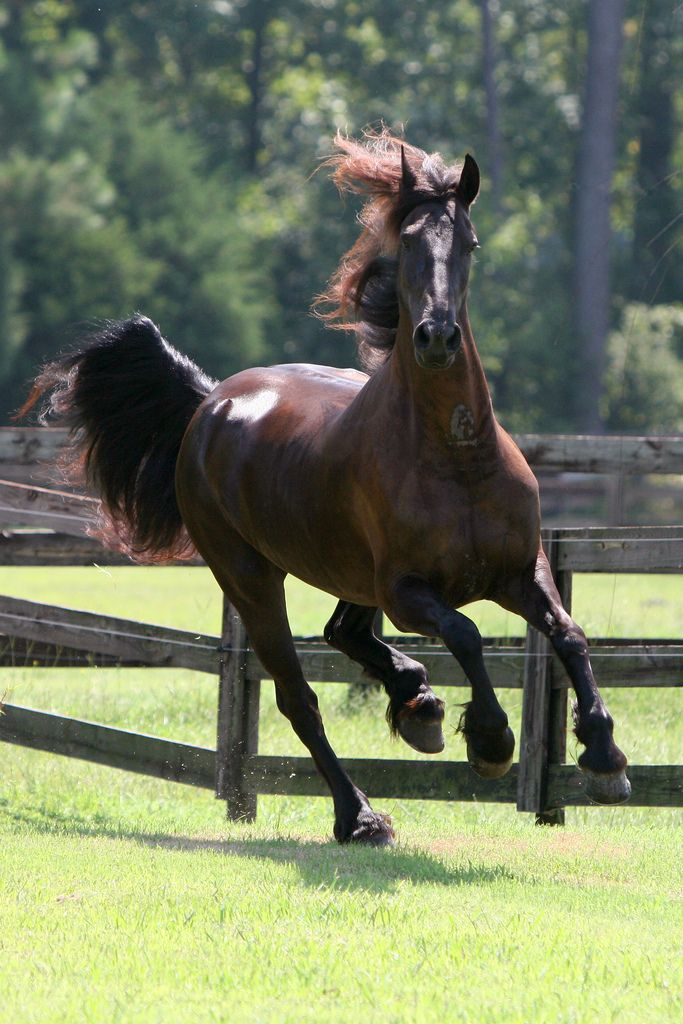 1000 images about draft horse breeds on pinterest