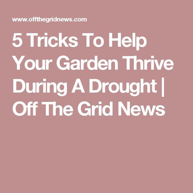 5 Tricks To Help Your Garden Thrive During A Drought | Off The Grid News