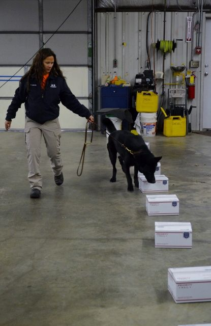 Search And Rescue Saturday - Detection Training - Tales and Tails