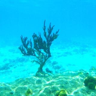 Curacao #dive #Curacao