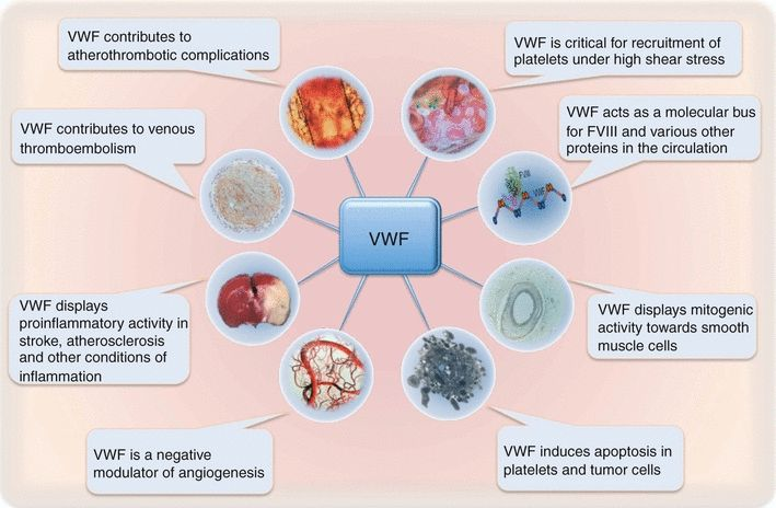 von Willebrand factor: the old, the new and the unknown - LENTING - 2012 - Journal of Thrombosis and Haemostasis - Wiley Online Library