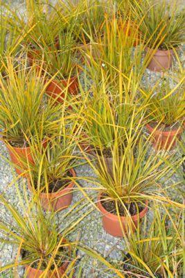 giardini idee pratiche manutenzione : giardini bassa manutenzione - erbe ornamentali - giardini - ridotti ...