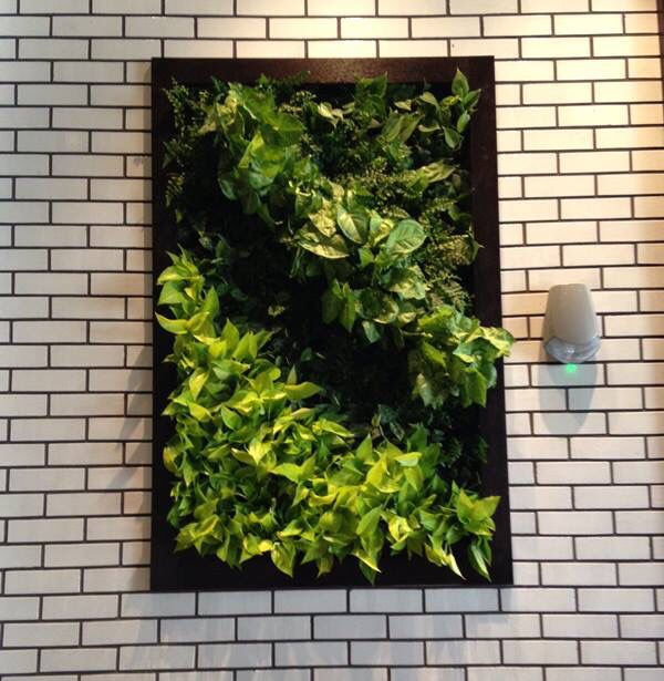 Beautiful Green a Wall by GLTi