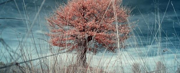 Fotografia w podczerwieni (ang. infrared, IR) dosłownie pozwala zobaczyć to, co niewidoczne. Zdjęcia wykonane w tej technice wyglądają jak z innego świata, są magiczne, tajemnicze i niespotykane.  http://www.spidersweb.pl/2013/04/fotografia-w-podczerwieni.html