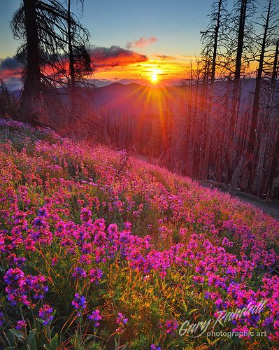 ✮ Beautiful SunsetGod Creations, Nature, Mount Hoods, Sunsets, Beautiful, Sunris, Steamboat Spring, Places, Flower