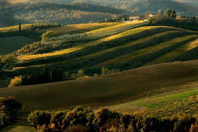 Chianti: tra vigne, cantine e degustazioni. Foto-gallery e immagini