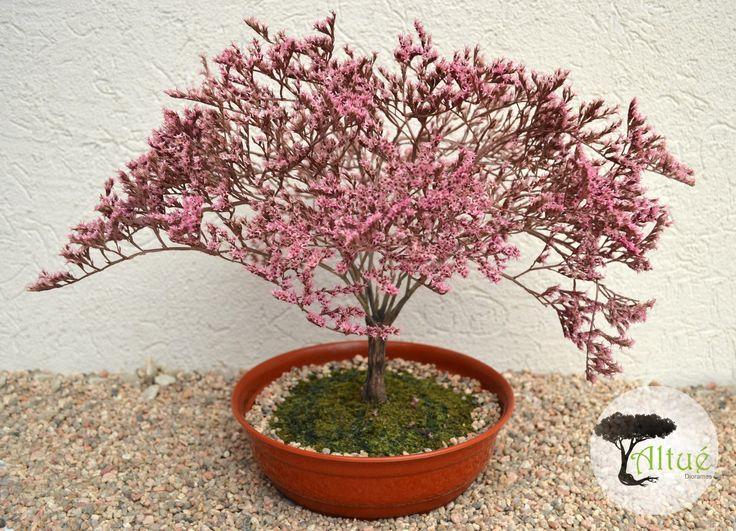 mejores 19 imágenes de bonsais en macetas en pinterest   bonsais