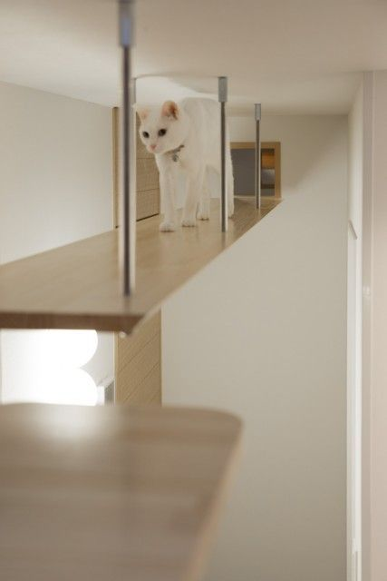 """Stressfrei! Das Haus, in dem """"Hunde, Katzen, Menschen"""" leicht leben …  – Cattio"""
