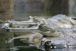 Kudy z nudy - Do krokodýlí zoo v Protivíně můžete i v zimě