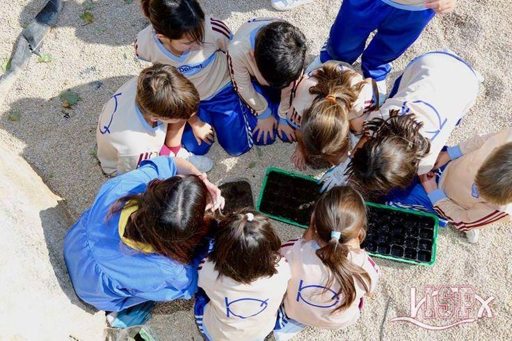 Los #alumnosISP pueden conocer con la observación directa diferentes tipos de plantas que cultivamos y seguir su crecimiento.  www.colegiosisp.com