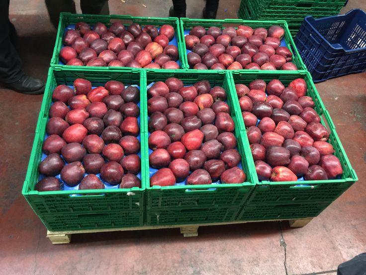 Η συσκευασία των μήλων γίνεται πάντα ανάλογα με τις απαιτήσεις του κάθε πελάτη (custom made) πάντα με την ξεχωριστή ποιότητα και φρεσκάδα απο την Realfruit.  Κεντρικά γραφεία Φιλίππου 10, Έδεσσα Τ.Κ.: 58200 Τηλ: 23810- 23237 Φαξ: 23810- 23159 email: sales@realfruit.gr website: www.realfruit.gr