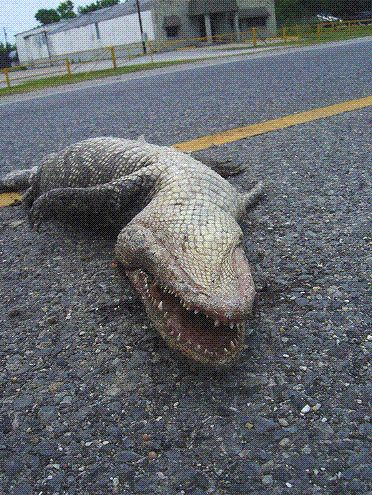 Dead Gators | Funny Florida Gator Jokes | Sports ...