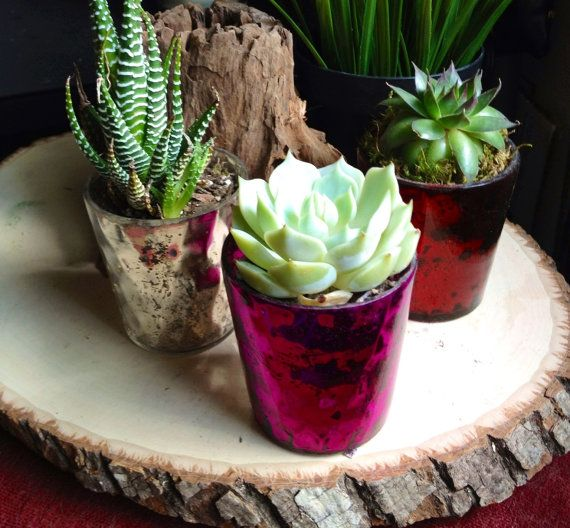 Stone Fox Bride's Molly Guy cites Etsy as one of her favorite succulent sources. Try the Red Lily Shop for a trio in mercury glass votives. etsy.com - Photo: Courtesy of The Red Lily Shop