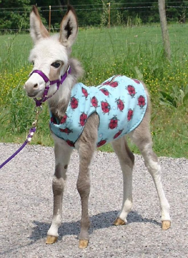 When It Comes To Donkeys, Smaller Is Definitely Cuter | Funzug.com