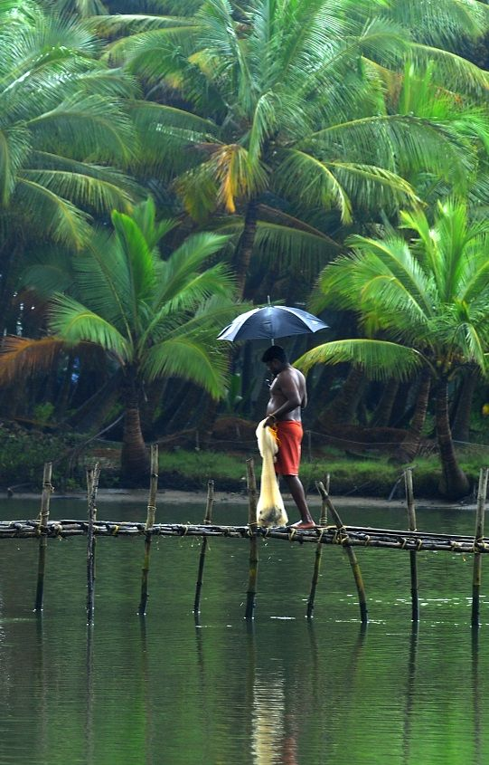A scene from the backwaters of North #Kerala. You will find these make-shift bridges all around. It reflects the simple lifestyle at the #backwaters.