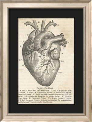 Anatomy of the Heart Giclee Print at Art.co.uk