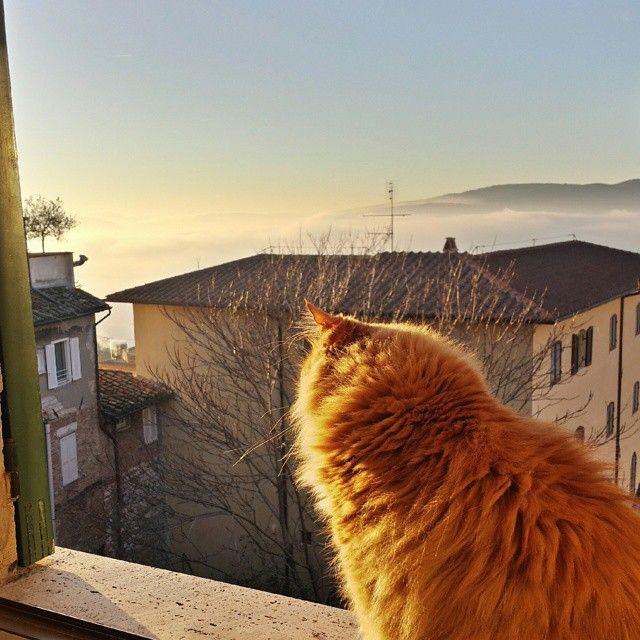 """E poi dalla nostra finestra un manto di nebbia... """"Anche la nebbia ha il suo fascino. Offusca la mente e predispone ai sogni."""" (Cit.) #nebbia #Perugia #Yoda"""