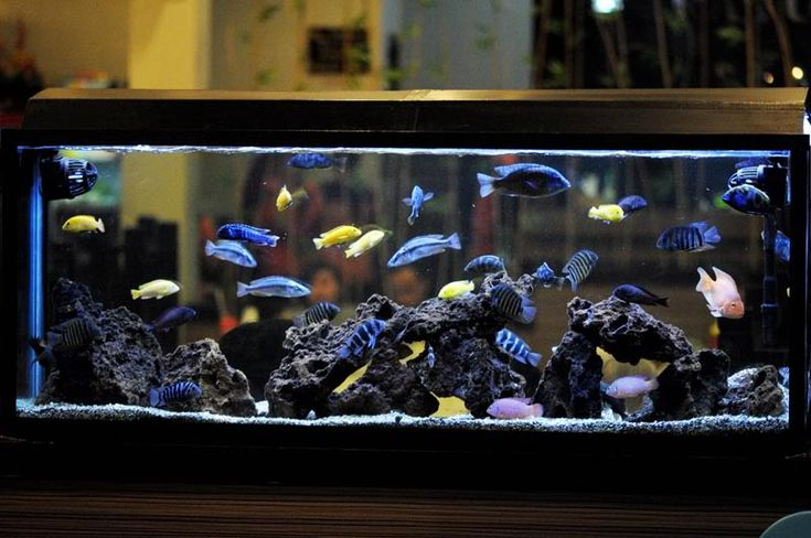 Pin by cristian osorio on modelos para acuarios for Cichlid fish tank