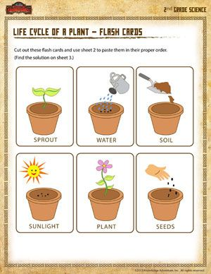 life cycle of a plant flash cards 2nd grade science worksheet science class. Black Bedroom Furniture Sets. Home Design Ideas