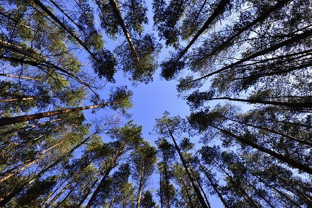 Wälder, Himmel, Blätter, Vom Unteren Rand Der, Green
