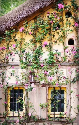 Dovecote and roses, Versailles, France