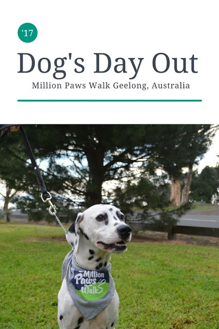 So many dogs! Archer and Opie had a puppy dog adventure in Geelong.