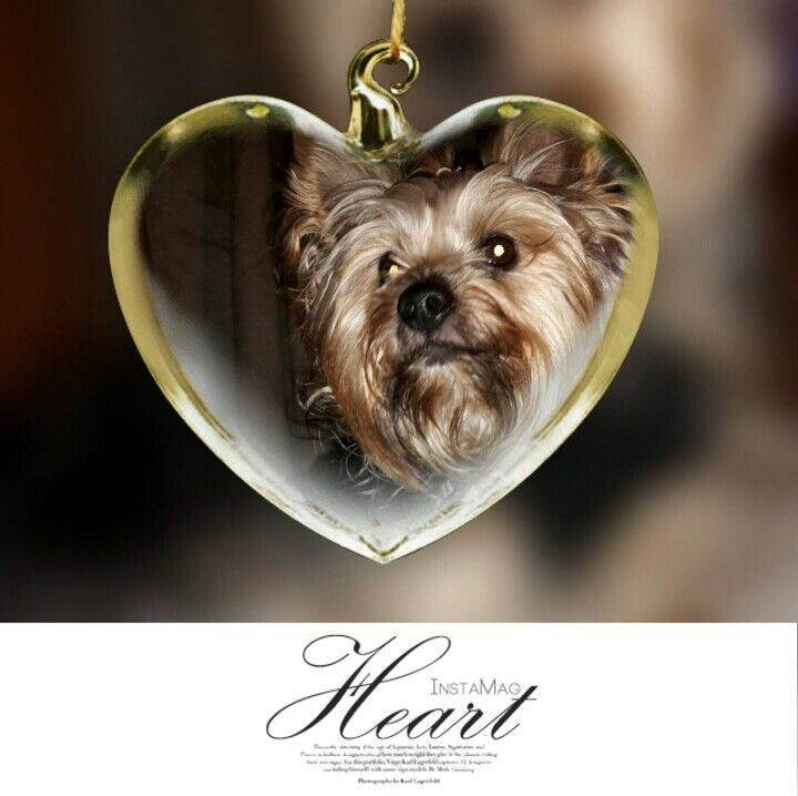 Ny heart