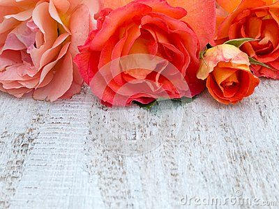 Orange roses on the white painted rustic background