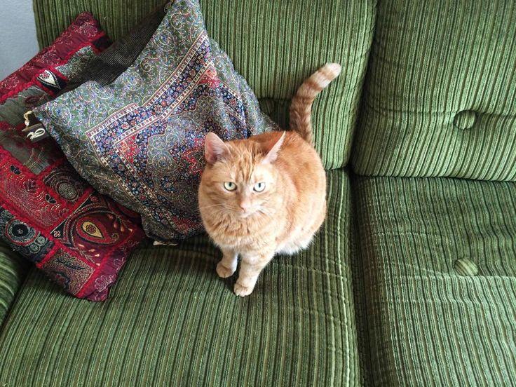 Frieda sucht noch Mitbewohner in Wien und freut sich über Post bei WG-Gesucht.de #Katze #Mitbewohner